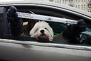 """Moscow, Russia, 26/02/2012..A dog looks from a car as an occupant waves a ribbon with the words """"Russia without Putin"""". Tens of thousands of people formed a 16-kilometre [10-mile] human chain along Moscow's Garden Ring Road in the latest protest against Prime Minister Vladimir Putin and his presidential election campaign. Opposition activists estimated that they needed 34,000 people to complete the chain and symbolically encircle central Moscow."""