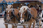 Horse-drawn tourist carriage on Taos Plaza