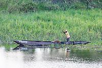 subsistance fisher poling his dugout canoe, Caia, Zambezi River Floodplain, Sofala Province, Mozambique
