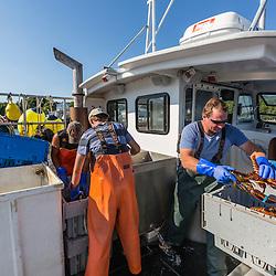 Captain Ivan Bly sorting lobsters aboard his boat 'Iris-Irene,' at the Tenants Harbor Fisherman's Coop in Tenants Harbor, Maine.