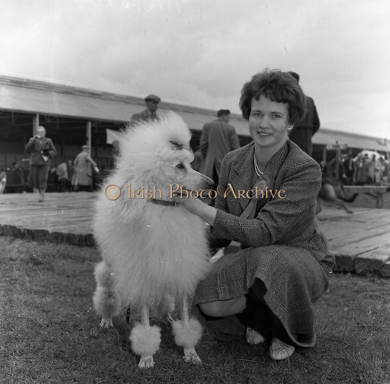 17/03/1961<br /> 03/17/1961<br /> March 3, 1961<br /> Irish Kennel Club Dog Show