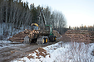 Photo Randy Vanderveen.Grande Prairie, Alberta.A forwarder brings cut logs from the bush and sorts them by size into decks for large sawmill, small sawmill, pulp or junk near the roadside where they can be loaded onto trucks. The trees harvested to control mountain pine beetle are utilized as much as possible for lumber, pulp or hog fuel for an area electrical co-gen plant.