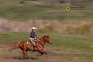 Cowboys ride at the Theodore Roosevelt Memorial Ranch near Dupuyer, Montana, USA Model Released