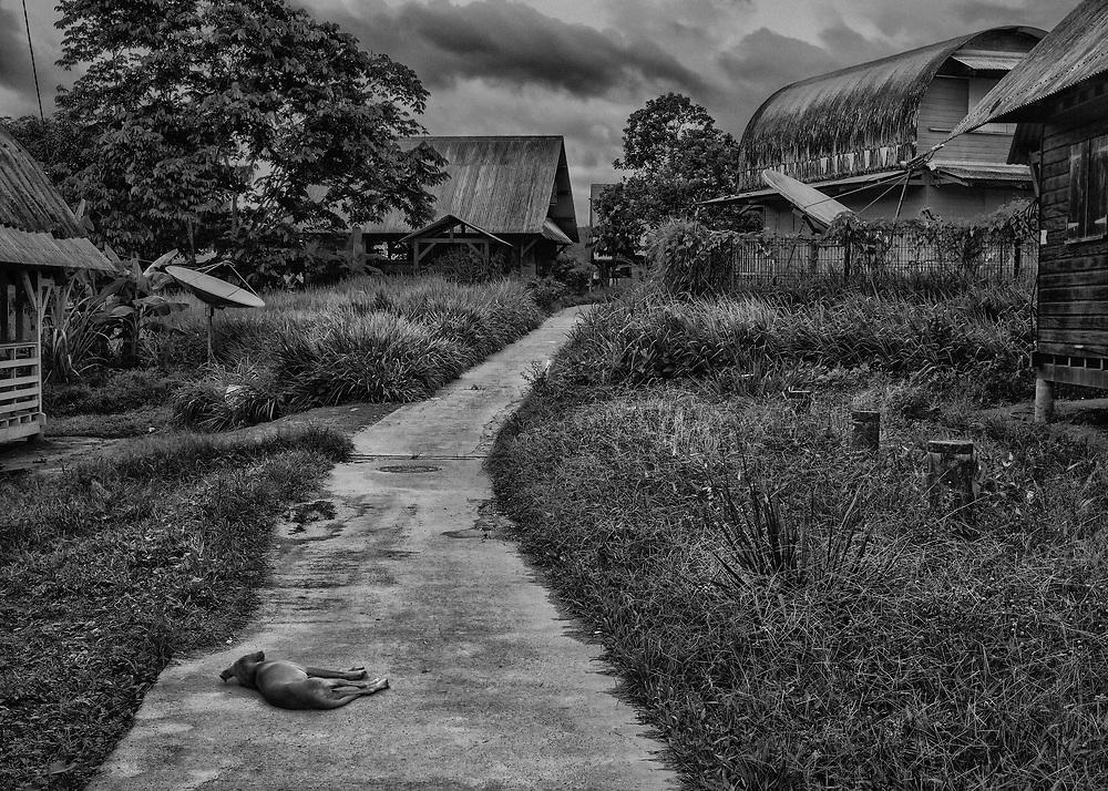 Camopi, Guyane, 2015.<br /> <br /> La commune de Camopi s'étend en pays amérindien sur une superficie de 10 030 km². Créée en 1969 elle est constituée du bourg, zone d'administration et d'une zone de vie annexe dans les villages de Trois-Sauts à une journée ou deux de pirogue. Commune la plus enclavée de la Guyane, les activités économiques sont quasi inexistantes. Un transporteur fluvial fait le lien avec Saint-Georges de façon hebdomadaire, le voyage peut durer entre quatre heures et deux jours. Une annexe du collège est ouverte en 2008. Jusqu'alors les enfants étaient scolarisés à Saint-Georges et hébergés dans un home indien, un pensionnat catholique. Une piste d'aviation inutilisable en saison des pluies est en cours d'aménagement. Dans cette région aurifère et sans autre réelle perspective de vie, certains habitants participent aux transports fluviaux qui alimentent les sites d'orpaillage illégaux.<br /> <br /> La concentration des populations dans le bourg s'accompagne d'une politique d'amélioration de l'habitat motivée par la nécessité de dépenser les crédits de développement alloués par la communauté européenne. L'habitat traditionnel tend à disparaître au profit de maisons fermées inadaptées au mode de vie communautaire. Des panneaux solaires sont installés pour fournir l'éclairage et des bacs de tri collectif sont mis à disposition. Sans service de maintenance, les installations solaires sont hors d'usage et les ordures triées sont finalement entassées dans une décharge à ciel ouvert.<br /> <br /> Les suicides récurrents qui touchent la communauté amérindienne de Camopi depuis quelques années ont remis en question le maintien de la zone d'accès réglementé mise en place en 1970, qui contribue à l'isolement de la commune. A la demande de la population, le préfet a extrait le bourg de Camopi de cette zone soumise à autorisation le 14 juin 2013. Un accord préfectoral est toujours nécessaire pour remonter dans les écarts le long de la rivière Camopi et dans le
