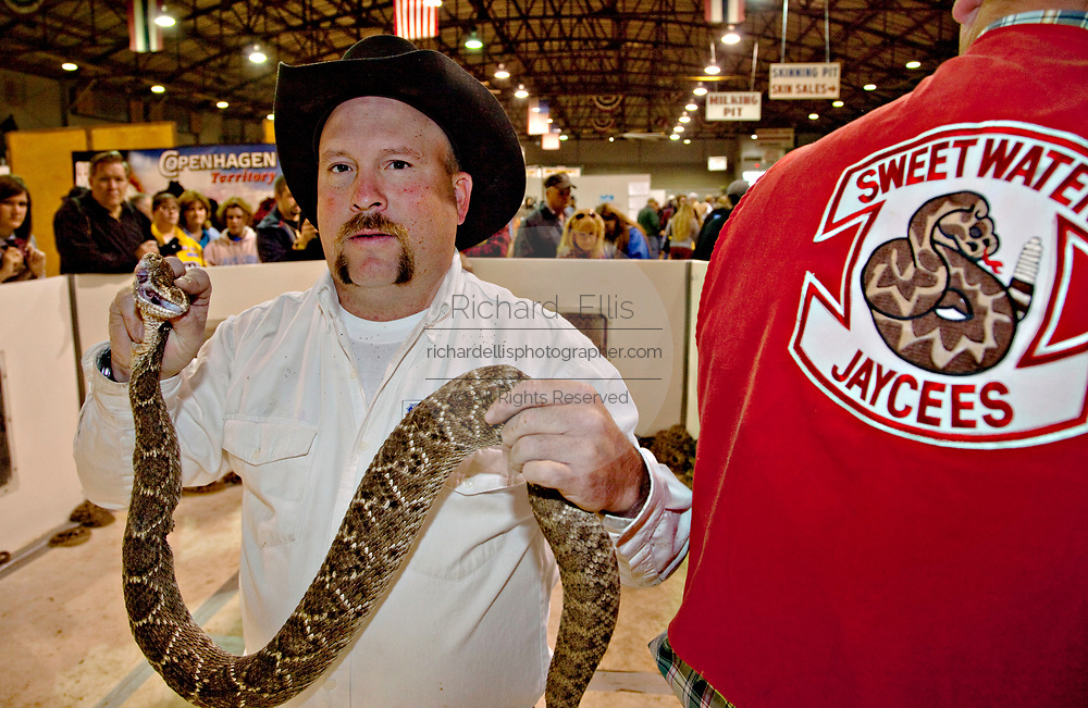 Terry Armstrong, a Jaycee volunteer snake handlers prepare to measure a western diamondback rattlesnake as the crowd looks on during the 51st Annual Sweetwater Texas Rattlesnake Round-Up March 14, 2009 in Sweetwater, Texas. During the three-day event approximately 240,000 pounds of rattlesnake will be collected, milked and served to support charity.