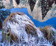 Frost on Reeds and Reflection of El Capitan in the Merced River, Yosemite National Park, California