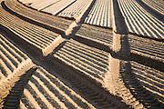 Patterns in soil prepared for sowing crops, Alderton, Suffolk, England