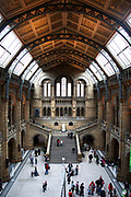 The Natural History Museum, London. With its cathedral-like structure, frescoes and sculptures, the Museum's Central Hall forms a fantastic backdrop to some of the highlights of the Museum's collection including a Diplodocus skeleton.