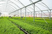 Israel, Aravah Desert plants in a greenhouse.