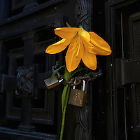 Single Yellow Flower on a Locked Door at a Mausoleum in La Recoleta Cemetery. Buenos Aires, Argentina. Image taken with a Nikon D3s and 16-35 mm lens (ISO 800, 35 mm, f/5.6, 1/500 sec)..