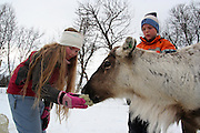 Children from a nearbey school are learning about the soth sami people, the indigenous minority of Norway and Sweden. Here by feeding a tamed reindeer.