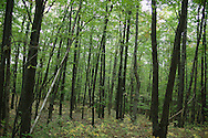 Woods of Manistee National Park