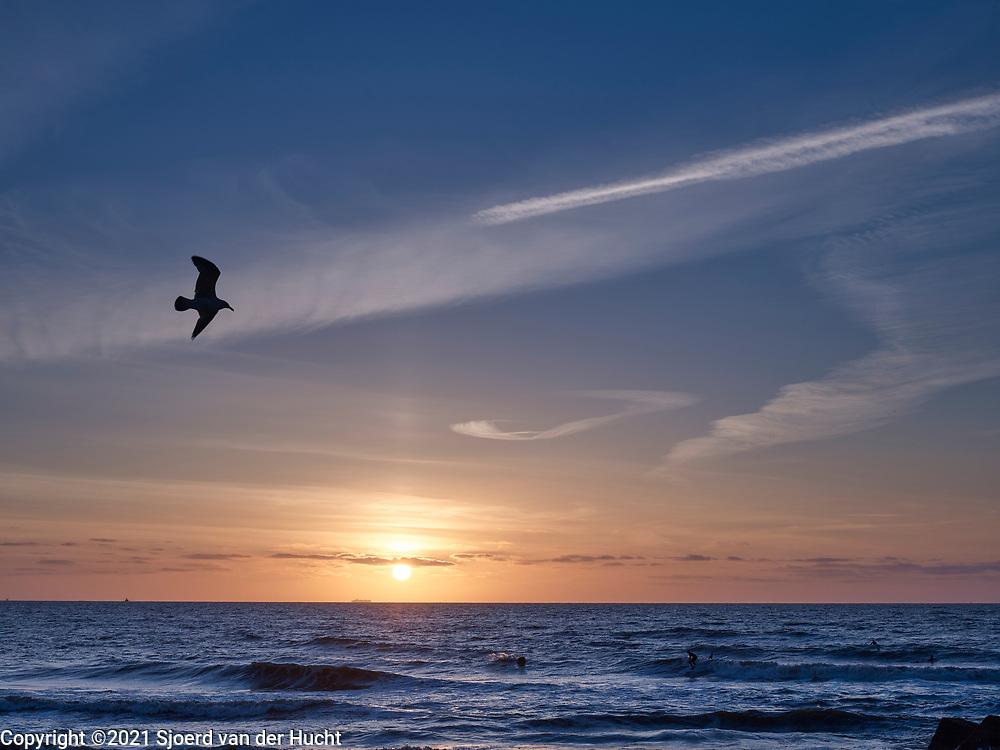 Surfers in de zee tijdens zonsondergang. | Surfers in the sea during sunset.