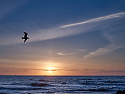 Surfers in de zee tijdens zonsondergang.   Surfers in the sea during sunset.