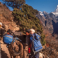 A Sherpa yak driver carries 3-year old Ben Wiltsie up the Everest Base Camp trail in Nepal.  Mount Kangtega looms behind.
