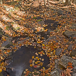A small stream in fall on Hyland Hill in Westmoreland, New Hampshire.