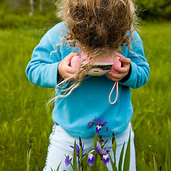 A young girl (age 4) photographs Blue Flag Iris at Highland Farm in York, Maine.
