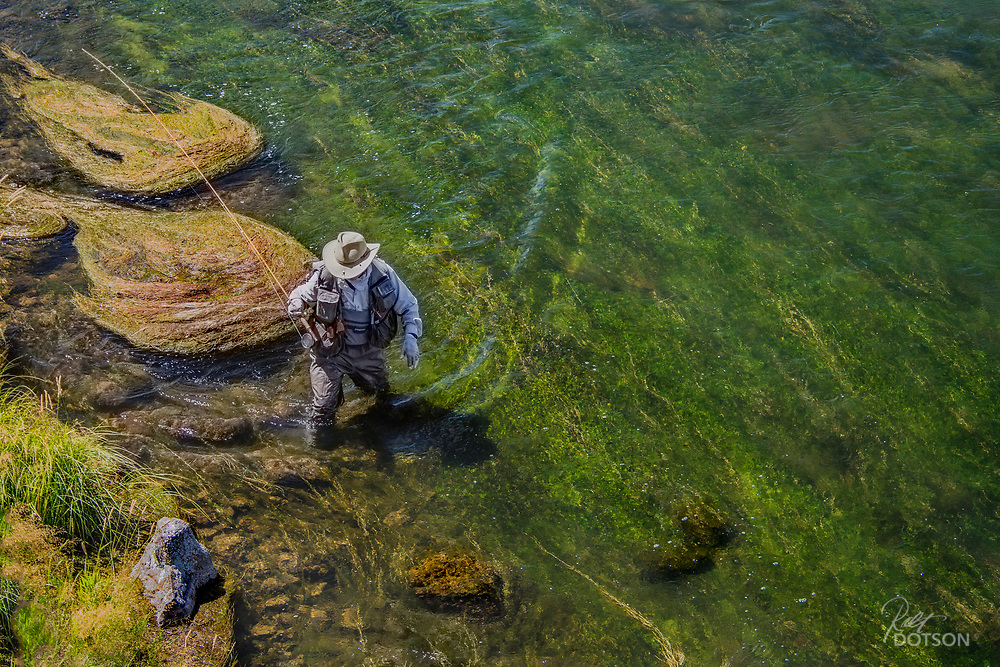 Angler Bruce Raskin makes his way through the aquatic vegatation of the Pinehaven section of the Henry's Fork.
