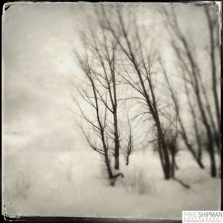 Winter trees and snow, Deer Flat National Wildlife Refuge, Lake Lowell