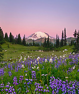 The time before dawn gives a beautiful purple glow as the phenomena known as the 'Belt of Venus' fills the sky behind Mt. Rainier.