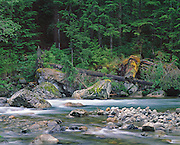 Spring Morning on the Sauk River, North Cascades WA