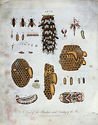 Beehives and bees (Apis) Copper engraving with hand colouring Encyclopaedia Londinensis, or, Universal dictionary of arts, sciences, and literature [miscellaneous plates] by Wilkes, John Publication date 1796-1829
