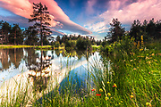 Charming small lake surrounded by green grass and wild flowers at sunset