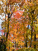 Tree foliage changes from green to yellow, orange and red in late September in Superior National Forest, Minnesota, USA.