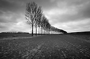 Somme WW1 Battlefield, July 1st-November 1916, France. February 2014<br /> Looking east, a line of trees follows the route of the advancing Britsh troops across the Somme Battlefield between Thiepval and Pozieres.