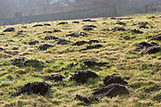 Mole hills, Gloucestershire, United Kingdom.