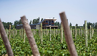 The new winery and tasting room is seen through Malbec grapevines at Bodega Melipal in the Luján de Cuyo area of Mendoza, Argentina.