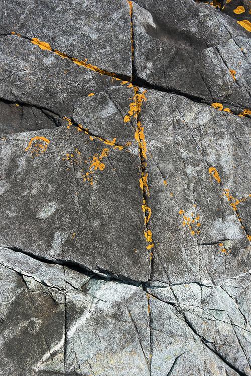 Xanthoria sp. lichen on the rocks of Eastern Head, Isle au Haut, Maine.