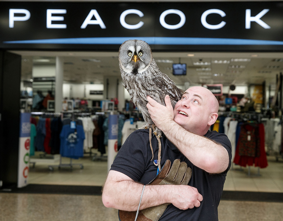 Allan Higgins of Owl-Magic of Stewarton, Ayrshire holds Phantom, a great grey outside Peacocks Dept store in Rutherglen Exchange Mall in Glasgow. The non-profit organisation were putting on a public display to raise awareness and highlighting the need for conservation of owls which are essential for the environment. Picture Robert Perry 17th April 2016<br /> <br /> Please credit photo to Robert Perry<br /> <br /> FEE PAYABLE FOR REPRO USE<br /> FEE PAYABLE FOR ALL INTERNET USE<br /> www.robertperry.co.uk<br /> NB -This image is not to be distributed without the prior consent of the copyright holder.<br /> in using this image you agree to abide by terms and conditions as stated in this caption.<br /> All monies payable to Robert Perry<br /> <br /> (PLEASE DO NOT REMOVE THIS CAPTION)<br /> This image is intended for Editorial use (e.g. news). Any commercial or promotional use requires additional clearance. <br /> <br /> Copyright 2016 All rights protected.<br /> first use only<br /> contact details<br /> Robert Perry     <br /> 07702 631 477<br /> robertperryphotos@gmail.com<br />   <br /> Robert Perry reserves the right to pursue unauthorised use of this image . If you violate my intellectual property you may be liable for  damages, loss of income, and profits you derive from the use of this image.