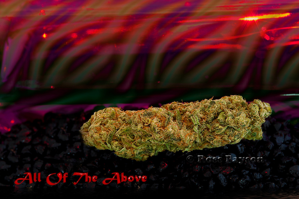 All Of The Above nug photo  - fine art nug photography produced in professional studio.