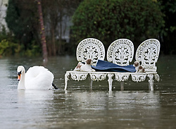 © Licensed to London News Pictures. 03/02/2021. Weybridge, UK. A swan passes furniture in the garden of a property in Weybridge in Surrey where water levels are rising. Large parts of the UK experience more wet conditions which is expected to bring further flooding. Photo credit: Ben Cawthra/LNP