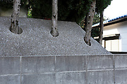 garden fence trees growing through holes in the concrete