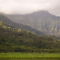 Hanalei Taro Patch, Hanalei Valley
