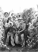 9969-2027. Group of hop pickers in the field. September 9, 1935. Riverside Hop farm, owned by A.J. Ray and Son, Inc., Newberg, Oregon.