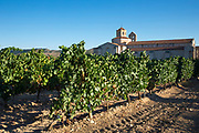 Hotel Castilla Termal Monastery of Valbuena, vineyard of Tempranillo grapes, ribera del Duero wine production, Valladolid,  Spain