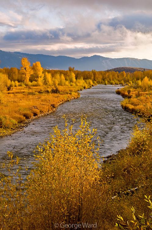 Narrowleaf Cottonwood and the Gros Ventre River at Sunset, Grand Teton National Park, Wyoming