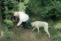October 1992, Alba, Italy --- Man Digging for Truffles with Trained Dog --- Image by © Owen Franken/CORBIS
