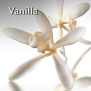 Vanilla Pictures | Vanilla Food Photos Images & Fotos