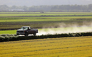 Goshen, New York - A truck driven by a farmer kicks up dust as he travels between black dirt fields on May 21, 2011.