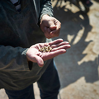 Vietnam | Agriculture | Coffee
