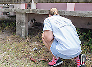 Chrissy Beckles attempts to coach a stray dog from under a building at Guayanes Beach, Puerto Rico.