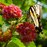 We were visiting friends in Swope.  Of course I had camera in hand and was able to capture this shot among the flowers.