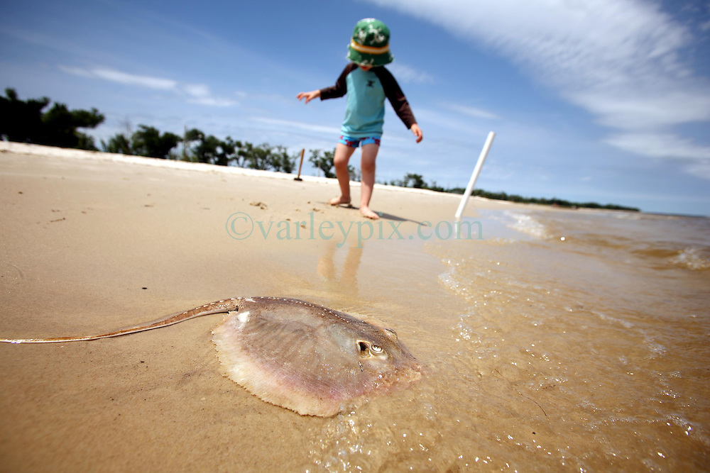 09 May 2010. Waveland, Mississippi USA. <br /> A child discovers one of 6 dead stingrays and two dead catfish in just a half mile stretch of beach. Whether it's early indications of oil pollution, or catch tossed from a local fishing pier, it is truly tragic to find so many once fine, now dead fish in such a short stretch of beach. Either way, it shows a callous disregard for the environment in which we live. Meanwhile all around locals, tourists and visitors relax and enjoy the beauty of South Beach,  an hour from New Orleans. Just a few miles off the coast, an impending disaster looms. With the continual flood of oil washing into the Gulf of Mexico and as winds turn and begin to push from the south, it is only and matter of when, not if the oil reaches the beaches. The barrier islands offshore are taking a battering soaking up the initial fronts of oil threatening everything in it's ever encroaching path. <br /> Photo; Charlie Varley/varleypix.com