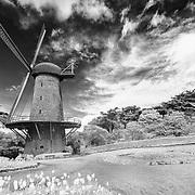 Dutch Windmill And Tulip Gardens - Golden Gate Park - San Francisco - Black & White