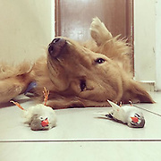 Meet Bob The Golden Retriever: He's Friends With Eight Birds And A Hamster<br /> <br /> Bob the Golden Retriever is from Brazil, and photos of the friendly hound <br /> <br /> This heart-warming picture might look like somethingout of a Disney film, but it's totally real – because these animals are just the best of friends.<br /> <br /> In the pictures, the fluffy squad can be seen napping together, and Bob seems totally nonplussed when he's got a group of budgies perched on his front legs.<br /> All in all, they're totally awesome, and go along way in supporting the argument that animals are better than humans.<br /> Luiz Higa Junior, 31, who owns the group, explained: 'Bob is 1 year and 9 months old. I got him when he was four months old and before him I had got a cockatiel and a parakeet.<br /> 'Since the beginning they lived together and the behaviour of them together was nice.<br /> ©Luiz Higa Junior/Exclusivepix Media