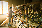 20150521_Sylvain Durey, élevage de brebis